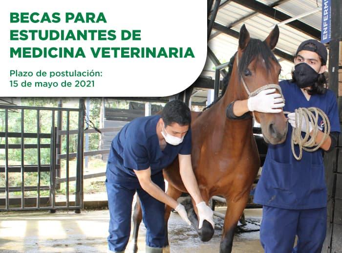 Becas-de-veterinaria