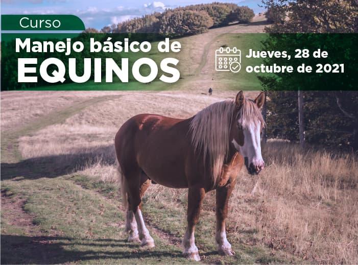 Curso de Manejo básico de Equinos