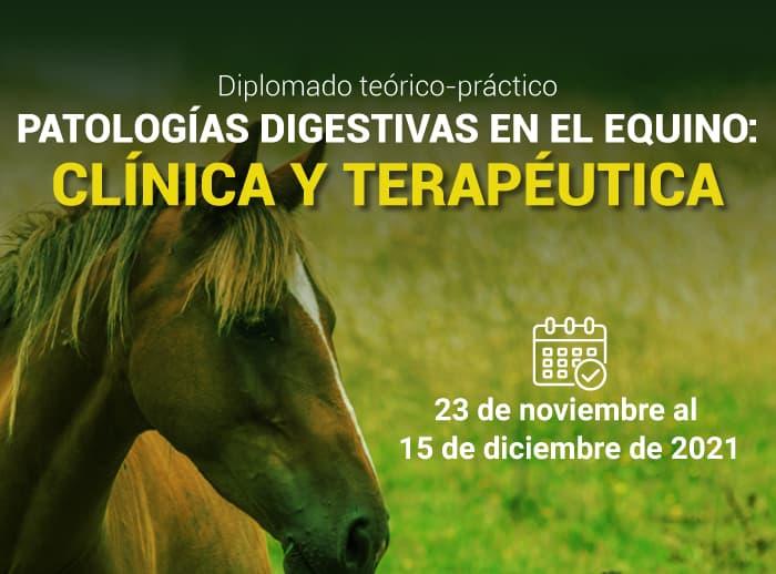 Diplomado-Teórico---Práctico-Patologías-Digestivas-en-el-Equino-Clínica-y-Terapéutica